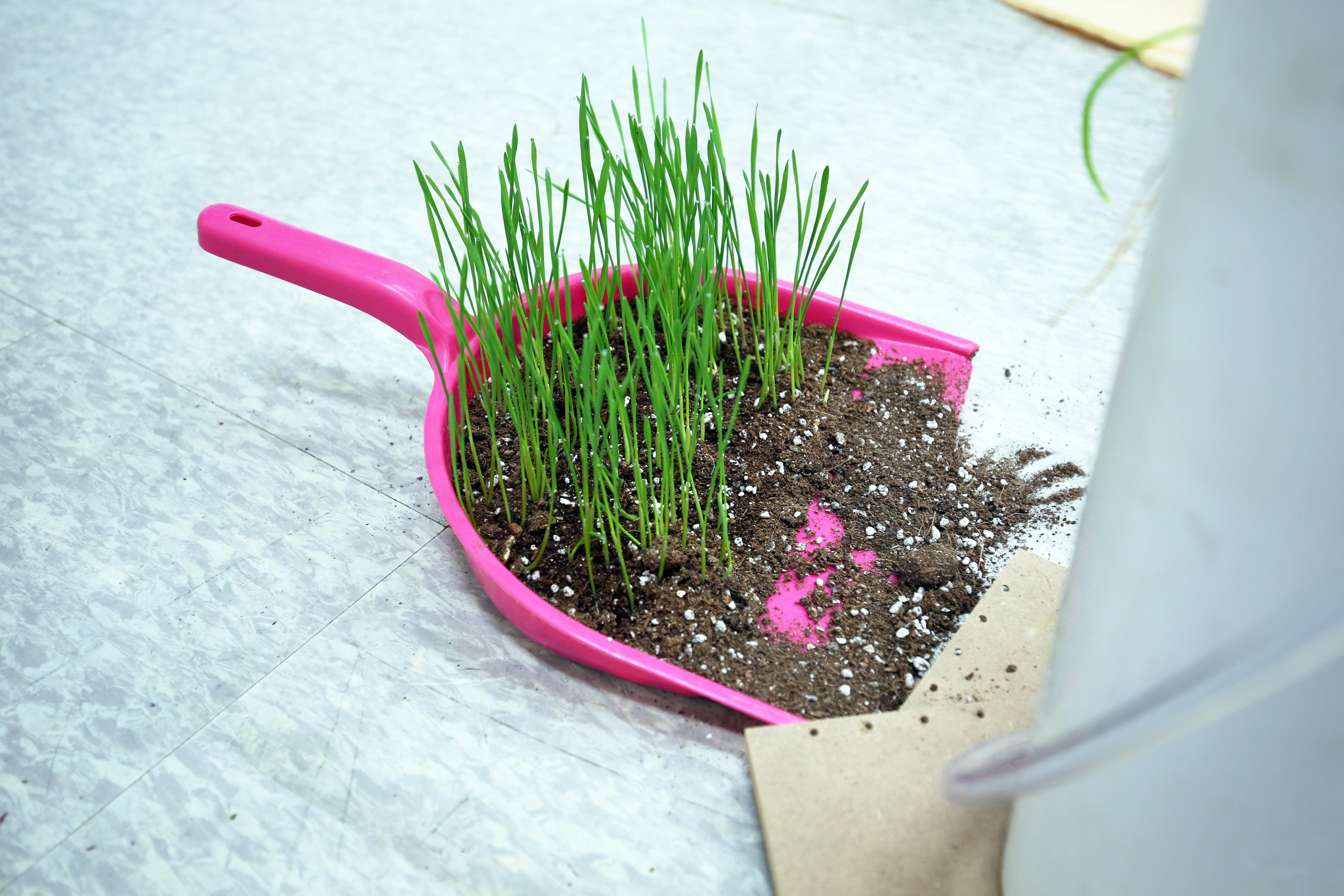 recycled gardening4